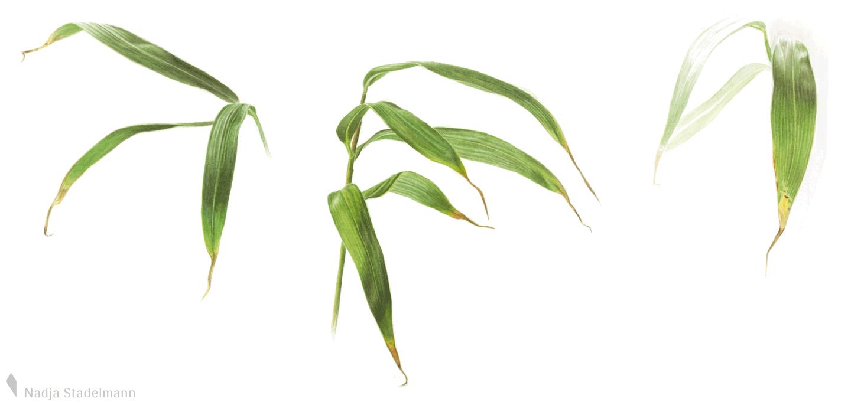Bambus Aquarell Nadja Stadelmann