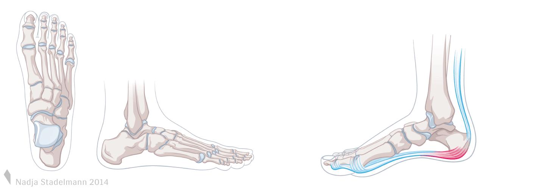 Anatomie Fuss Fersenschmerz Nadja Stadelmann