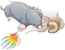 MARKL BIOLOGIE Säugetiere