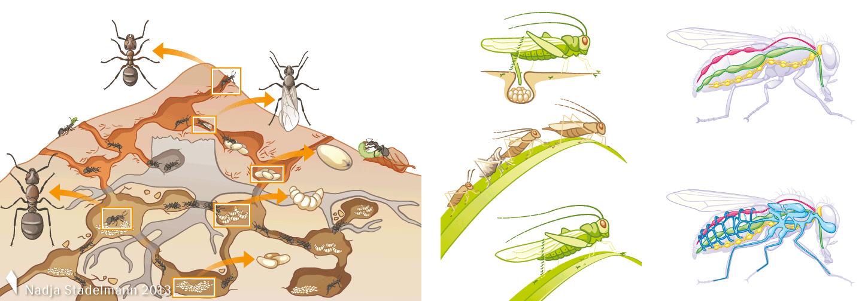 Klett Lehrmittel Biologie Ameisenstaat Metamorphose Organe Nadja Stadelmann