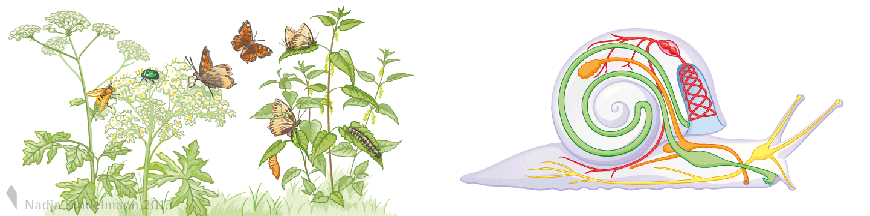Klett Lehrmittel Biologie Nahrung Schmetterling Organe Schnecke Nadja Stadelmann