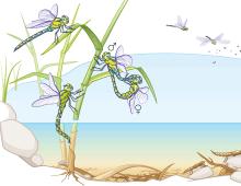 MARKL BIOLOGIE Wirbellose Tiere