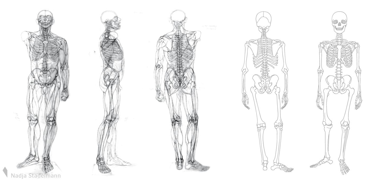 Nadja Stadelmann » Skelett Mensch