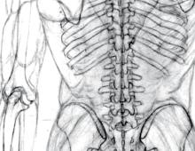 Skelett Mensch